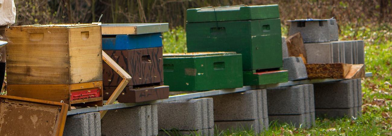 Olika typer av bikupor