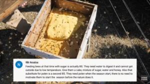 Words of Wisdom för sockersubstitut under vintern för bina